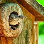 HK_0414_Birdhouse-lores