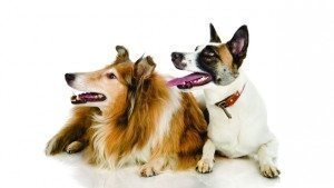 WEB_NP_1014_TwoDogs