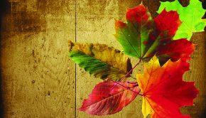 Fall into an Organized Autumn