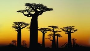 The Tree of Life Keeps Us from Aging
