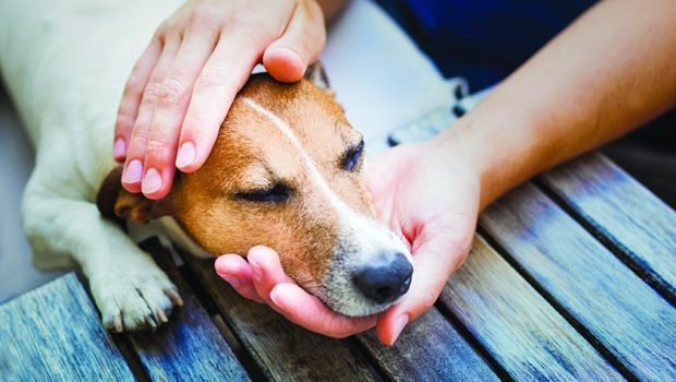 Helping Pets Transition Peacefully Through Holistic Hospice