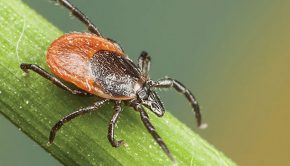 2017 An Exceptionally Bad Year for Ticks - Natural Awakenings - NJ