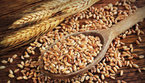 Valley Integrative Pharmacy Introduces Testing for Wheat Sensitivity - Natural Awakenings