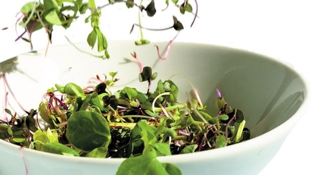 microgreens-boost-nutrition