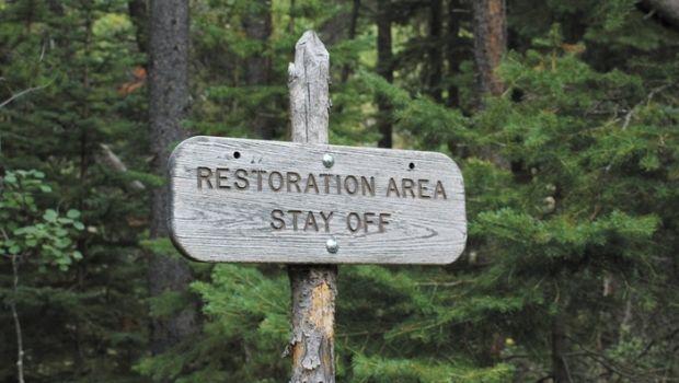 Forest-Restoration-Climate-Change