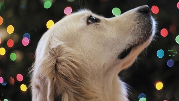 holiday-treats-for-pets