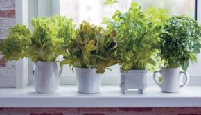 Indoor Edible Gardening