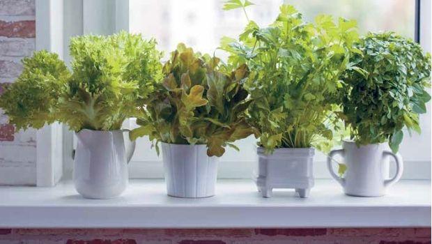 Indoor Edible Gardening