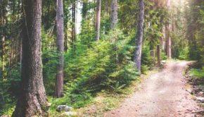 medmeditative walksitative walks