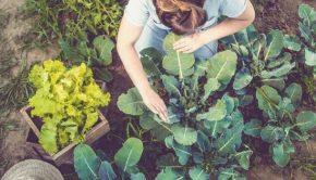 Regenerative Organic Farming