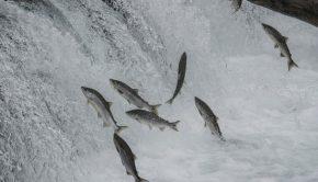 fish-jumping-near-dam
