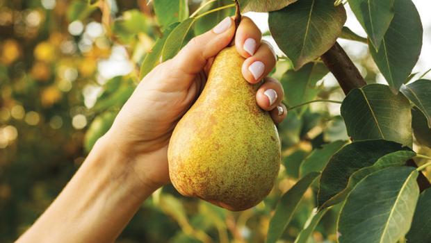 fall-fruits